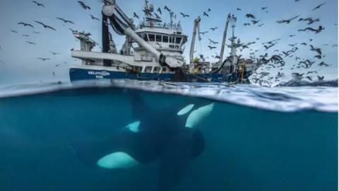 De mooiste natuurfoto's te zien in Naturalis 2017